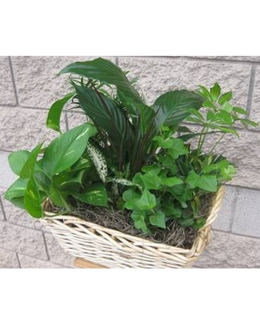 Planter Basket with assorted green plants