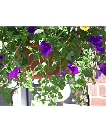 MIXED LARGE HANGING BASKET