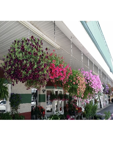 Blooming Hanging Basket