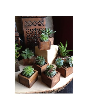 succulent in rustic box