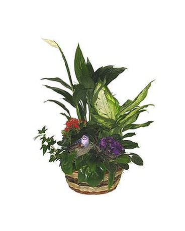 Bird Planter - 10 inch basket