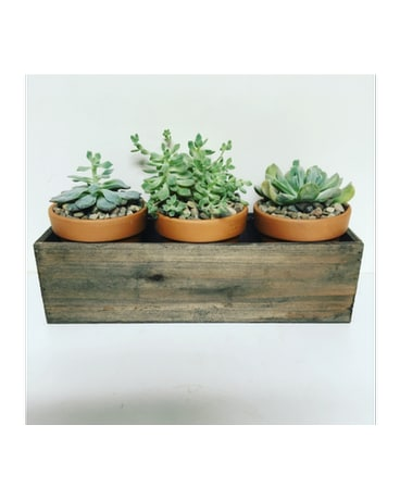 Vintage Succulents - 14 inch Wooden Box
