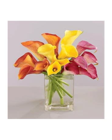 Colorful Mini Callas