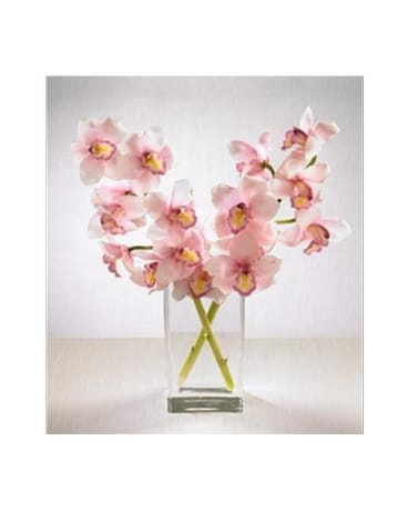 pink cymbidium sprays