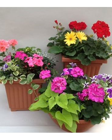 Utica Florist Flower Delivery By Chesters Flower Shop And Greenhouses