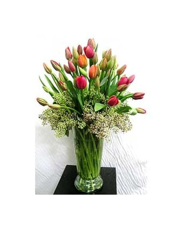 Tulips and Eucalyptus
