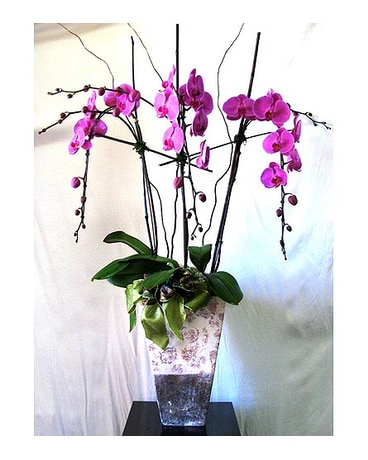 Large Triple Orchid