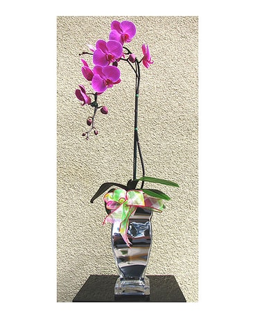 Phalaenopsis Orchid In A Silver Vase In San Diego Ca The Floral