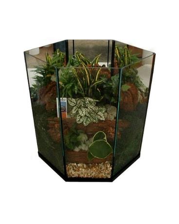 Tropical Foilage Terrarium Extra Large Metro Detr In Southfield Mi