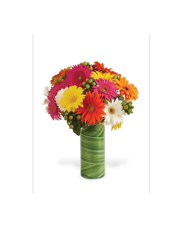 Gerbera With A Twist!