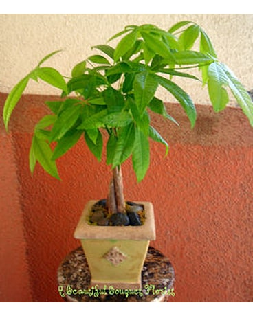 Zen Money Tree