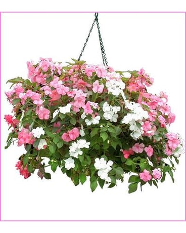 Impatient Hanging Basket