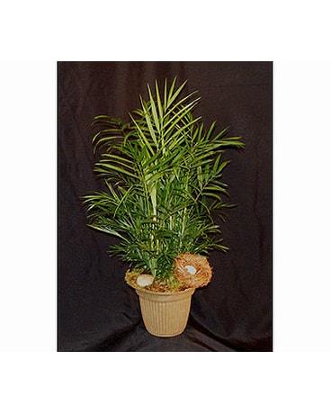 Plants Delivery Ferndale MI - Blumz   by JRDesigns