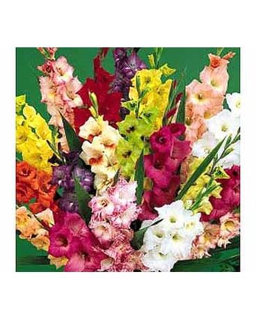 Summer Bouquets Delivery Ferndale MI - Blumz   by JRDesigns
