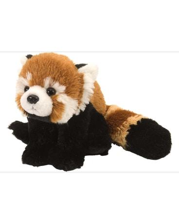 Red Panda Stuffed Animal 8 In Ajax On Reed S Florist Ltd