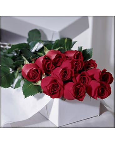 1 dz Red Roses Boxed