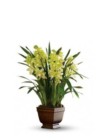 Splendid Orchids in Norristown PA, Plaza Flowers
