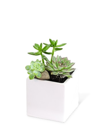 Small Succulent Garden Plant