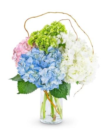 Sweet Hydrangea In Bonita Springs Fl Heaven Scent Flowers Inc