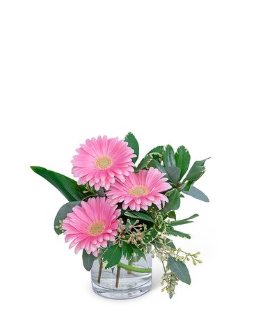 Gerbera Simplicity Flower Arrangement
