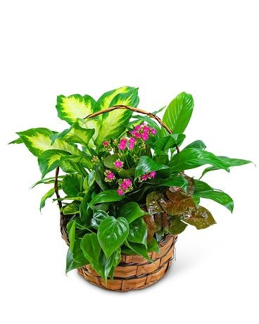 Medium Blooming Dish Garden Flower Arrangement