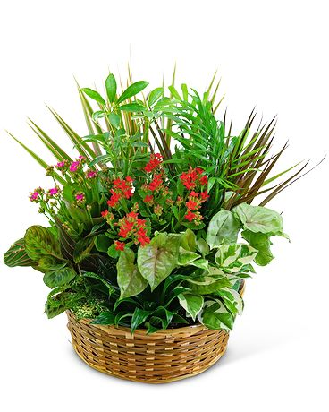 Large Blooming Dish Garden Flower Arrangement