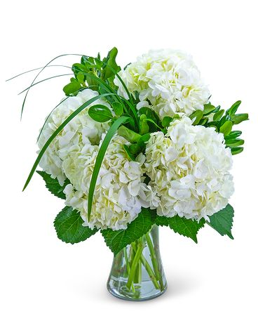 Hydrangea Halo Flower Arrangement