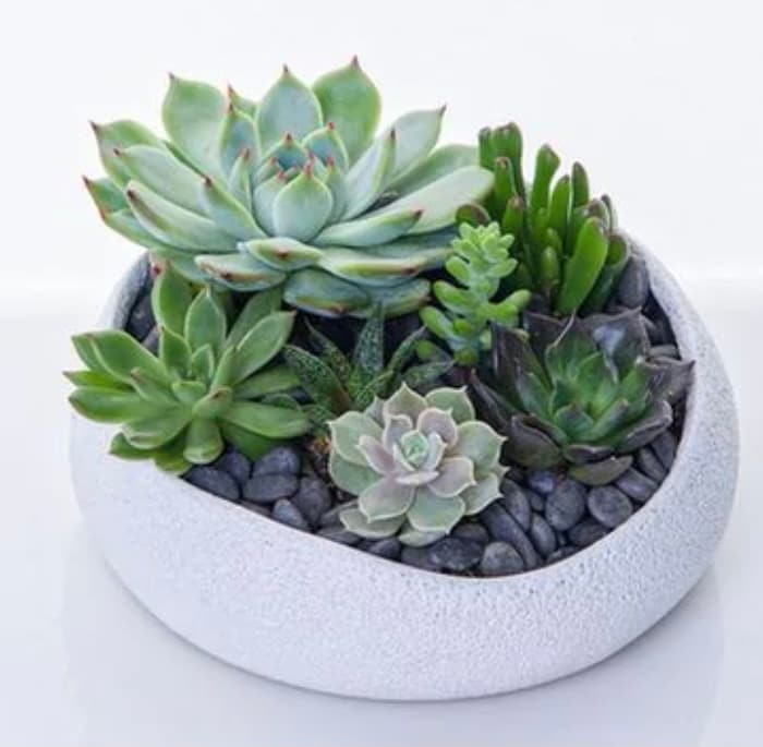 Moms Love Succulent Designer Display