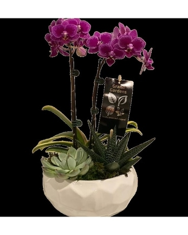 Green Round Anthurium Planter Plant