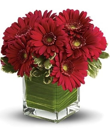 Southern Living Gerbera Flower Arrangement