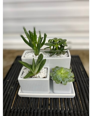 4 piece white succulent planter Plant