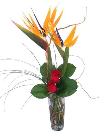 Lovebirds by Cactus Flower Flower Arrangement