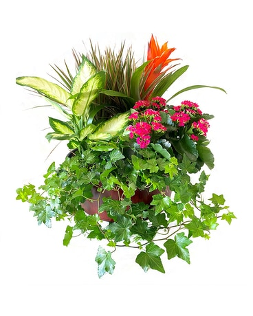 Delightful by Cactus Flower Flower Arrangement