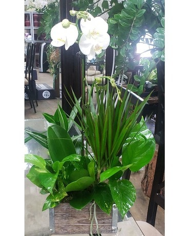 Orchid Garden Flower Arrangement
