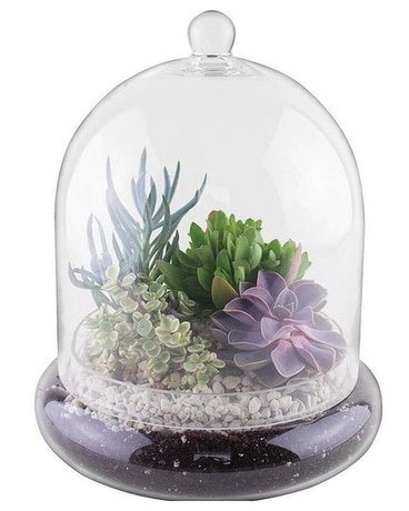 Cloche Terrarium With Succulents Plant