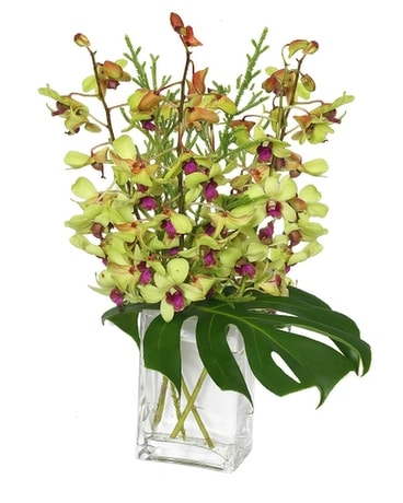 Out of this World Orchid Arrangement Flower Arrangement