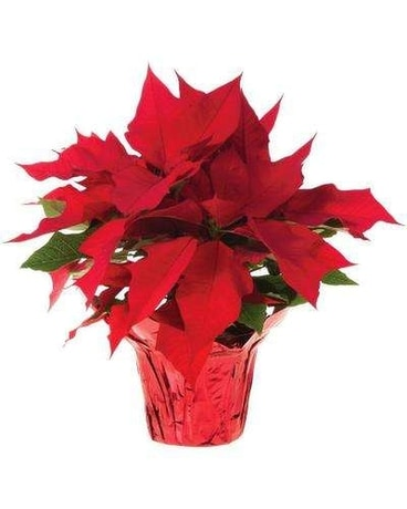 Christmas Flowers Delivery Royal Palm Beach Fl Flowers More Inc