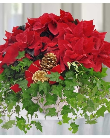 Poinsetta and Ivy Garden Basket Flower Arrangement