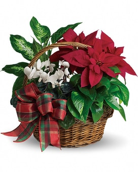 Holiday Homecoming Basket Dish Garden Plant