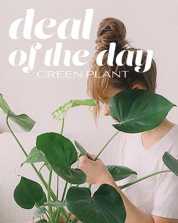 Green Plant Deal of the Day Flower Arrangement