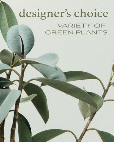 Designer's Choice - Variety of Green Plants Flower Arrangement