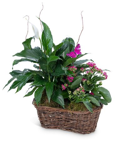 Harmony Basket with Butterflies Flower Arrangement