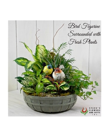 Bird's of a Feather Dish Garden Flower Arrangement
