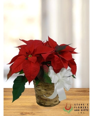 What's Your Poinsettia? Plant