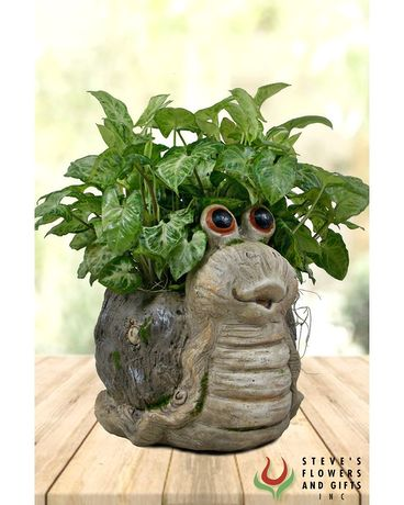 You Snailed It! Plant