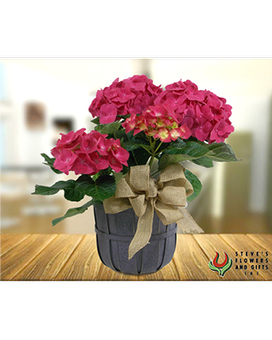 Hydrangea Plants Flower Arrangement
