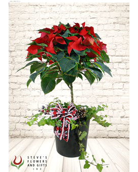 Poinsettia Topiary Tree Plant