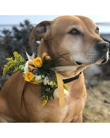 Pet Corsage Flower Arrangement