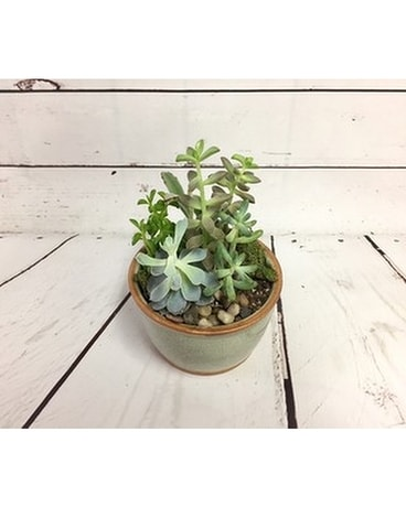 Small Succulent Dish Garden Flower Arrangement