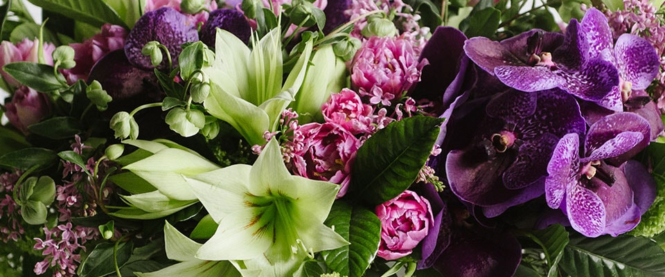 Seasonal Winter flowers delivery in Boston, Newton and NYC